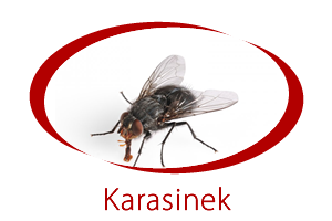 karasinek