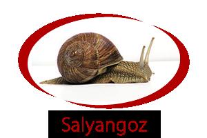 salyangoz